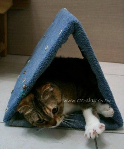 糖糖窩在三角形貓隧道裡~