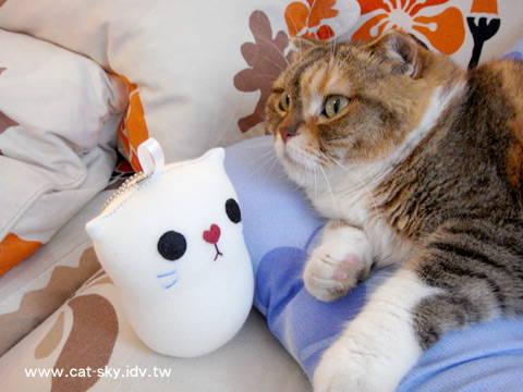 縫了一隻小貓咪!