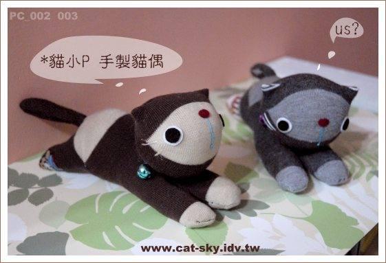兩隻淘氣的趴趴貓,現在趴在台北貓醫院的櫃台玩耍...