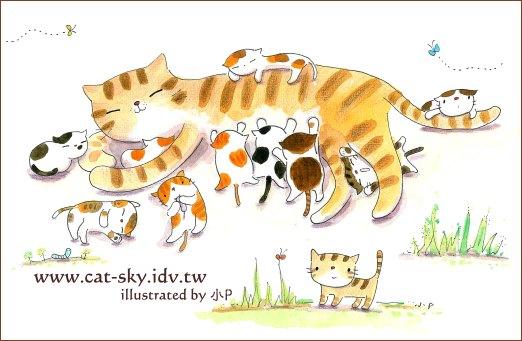 貓媽媽和11隻小小貓