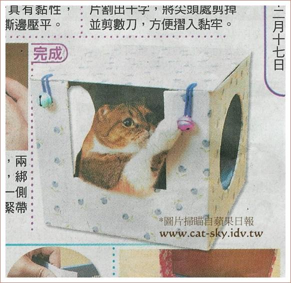 糖糖正在玩貓窩上的鈴鐺