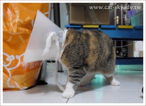 戴小花的糖糖 不太會走路了, 還會 [倒退嚕]....