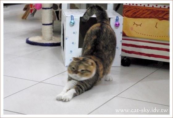 貓伸個懶腰先...