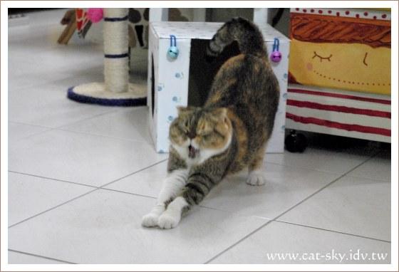 打個貓呵欠