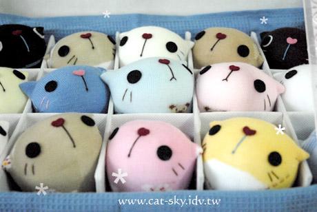 呆呆貓-一箱小貓15隻