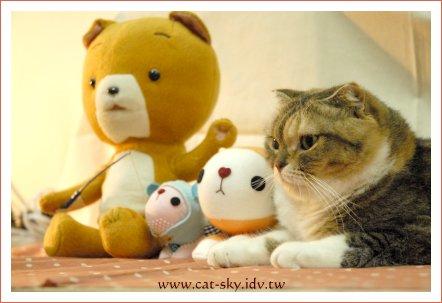 帶玩偶來看可瑪貓!