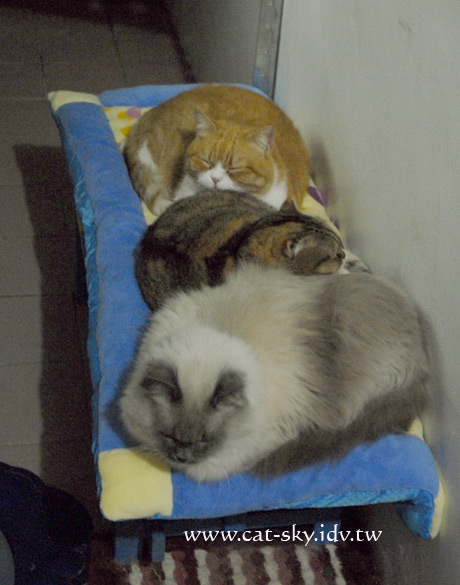 2007年最後一天,肥貓還在睡...