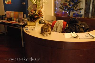 貓掌櫃-小肥糖打工當櫃台小姐喔!