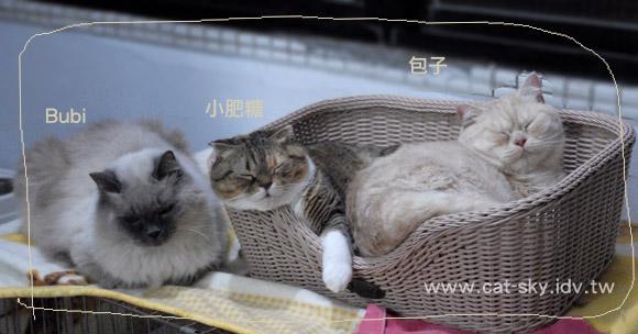 天氣很冷  貓咪窩在一起睡覺!  三隻小[豬]