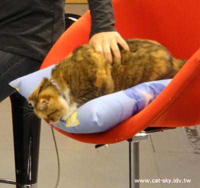 糖糖似乎想跳下椅子去....我有試著阻止一下.....