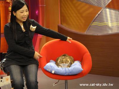 上節目的有貓小P,還有超級貓咪大來賓 小肥糖啦!