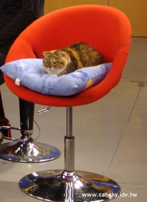 糖糖很安靜的窩在紅色沙拉高腳椅上