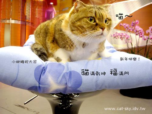 小肥糖祝大家 貓滿乾坤 福滿門喔! 也就是 貓咪有很多很多 多到堆到門口了唷~