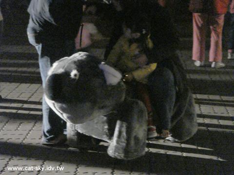 廣場上的無尾熊車車