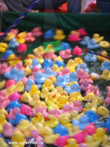 是彩色的小鴨子在滑水...