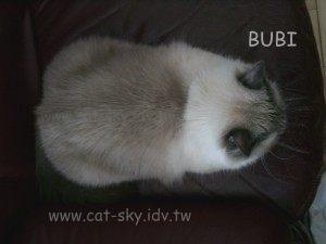 bubi-滑鼠貓