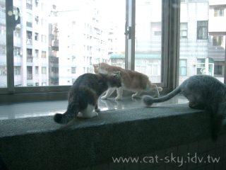 貓咪的專屬陽台超大景觀套房喔!