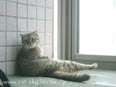 可可喜歡坐在窗邊看風景,像貴妃一樣的慵懶!