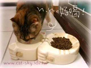 糖糖喝小貓臉的貓碗的水...