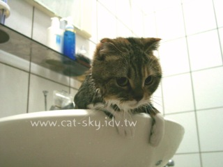算了我乖乖給你洗可以了吧!?