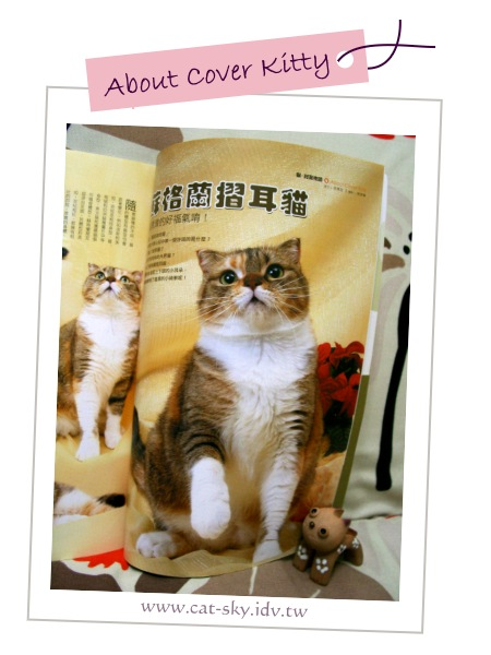 貓  封面物語  小肥糖