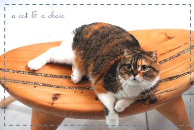 小肥糖和她的貴妃椅