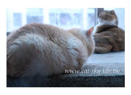 包子活像顆肥大的貓餃子!