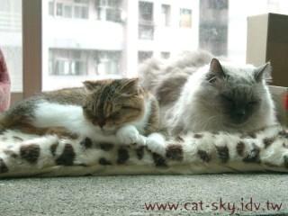 糖糖和BUBI在新買的豹紋睡墊上睡覺嘍~