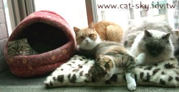 天冷冷! 喵喵們窩在一起睡嘍~