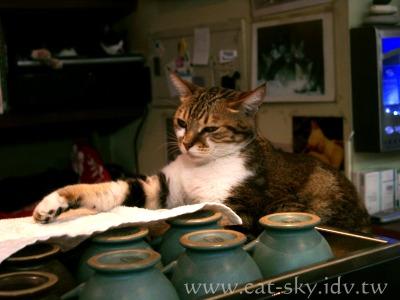 極簡咖啡的貓