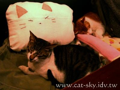 極簡咖啡的在沙發椅熟睡的貓