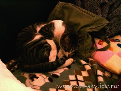 極簡咖啡的貓 枕頭是小若的背包