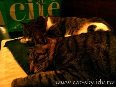 極簡咖啡的貓 為什麼睡得那麼香??? 因為底下有個電熱墊