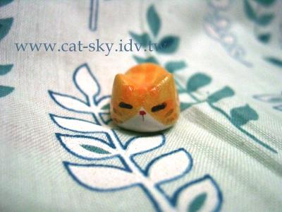 s5  橘貓