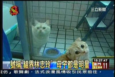 貓咪泡澡卡哇伊-愛泡澡貓糖糖上三立新聞嘍!